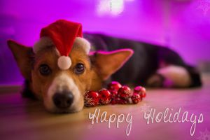 Happy Holidays everyone by BlackPepperPhotos