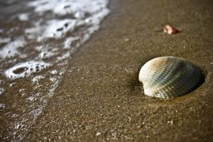 lonely shell by dnyphotography23
