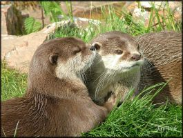 Otters by jayvoh