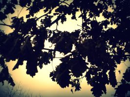 left over leaves by misscuteness