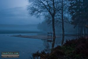 Foggy morning 1 by OrisTheDog