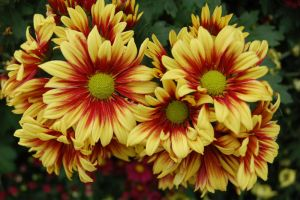 yellow and red by kluxorious