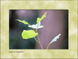 Green by Arte-de-Junqueiro