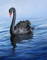 Black Swan by CitizenOlek