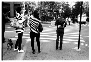 Zebra Crossing. by Treamus