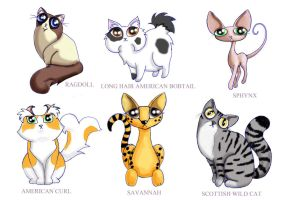 New funny cat characters by KingZoidLord