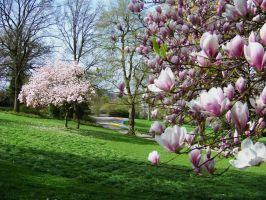 Spring in the Park by eReSaW