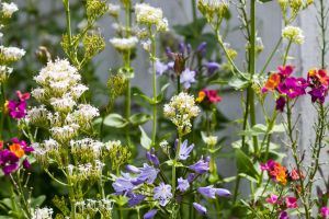 Cottage Garden by ARC-Photographic