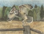 Short-eared Owl in Charcoal and Pencils by CheshireGhost
