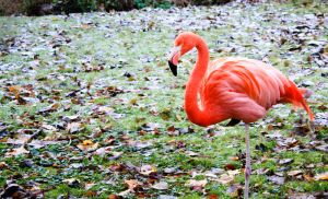 Pink Flamingo by city17