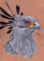 Secretary Bird by KristynJanelle