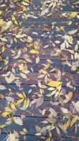 Leaves on the deck by Ginger-Kit
