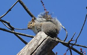 Squirrel on top.. by sweatangel