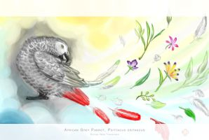 EA Project 2: African Grey Parrot by meihua