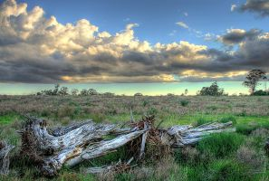 HDR Log Landscape 400D by pantsonnos