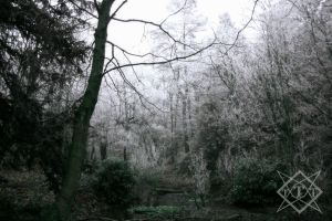 Moor Pond Frosty Woods by The-Travellers-Tale