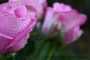 pink far away from you by angela808