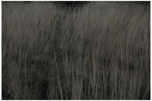 through the grasses.... by pathworking