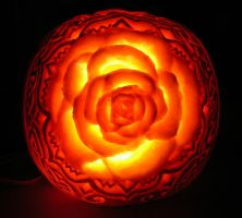 Rose Pumpkin by Theophilia