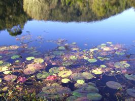 Water Plants_4 by GoblinStock