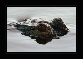 Gator Gaze by OpticaLLightspeed