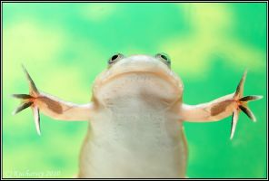 Xenopus laevis II by Dark-Raptor