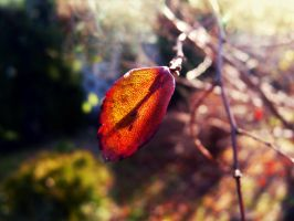 autumn2 by ejty