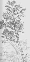 Tree Sketch by ThEquivalency