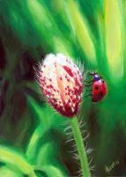 Ladybug and flower by Pekkia-Chan
