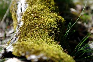 Moss by friedapi