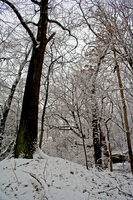 Winter Forest Stock 16 by AreteStock