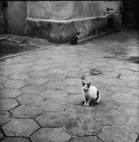 street cats by szuwar