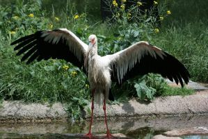 stork 3 by Drezdany-stocks