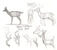 Terrible Deer Legs Tutorial by Wolfy-T