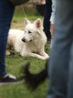 Moments from a Dog Show by enor14
