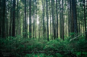 My summer forest 1 by Kelshray-photo