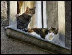 Cats at the window by kanes