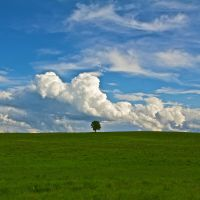 Tree and Clouds by batmantoo