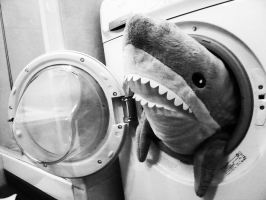 Shark in the washing machine.. by Samain