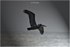 Fly Away by ap-photography