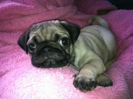 Gucci at 8 weeks by fizzybuff