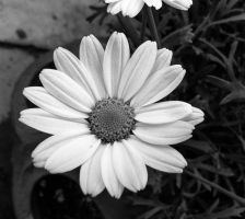 The Colourless Flower by JessicaGilray