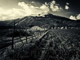 Grizzo - Campagna by LuGiais