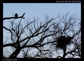 Llano Eagles by lucifie