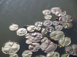 the land of the lily pads by Kala1Nadia