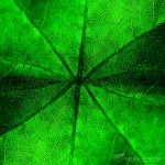 Green Veins by DREAMCA7CHER