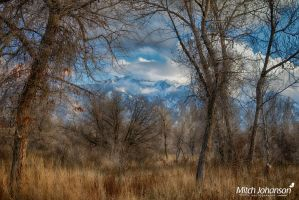 Waiting For Snow HDR by mjohanson