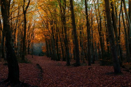 Autumn Forest stock.. by AledJonesStockNArt