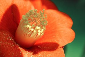 the flower2 by dyefish