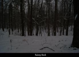 Winter forest- STOCK-1 by Rainny-Stock